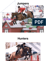 Hunters Jumpers