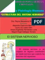 Estructura Del Sistema Nervioso Para Exponer