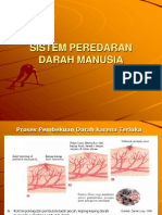 Bab 5 Sistem Peredaran Darah Manusia-2