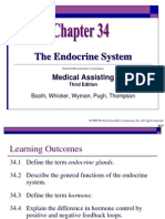 Chapter 34 the Endocrine System