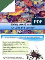 biology yr 9 diversity of life 2013