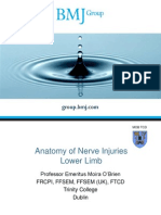 Anatomy of Nerve Injuries Lower Limb BMJ