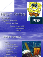 Notes on the Phylum PORIFERA