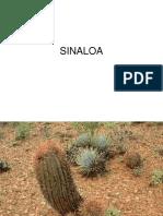Sinaloa 1