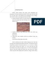 Struktur Sedimen Darat Transisi Dan Laut