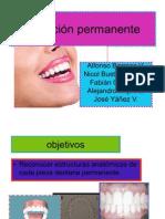 42535410 Seminario Morfologia Dental Dientes Permanentes