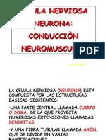 4. Clase Neurona