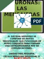 1. NEURONAS.ppt