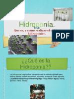 hidroponia 2