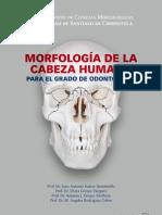 Morfologia de La Cabeza Humana
