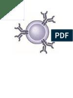 componentes do sistema imunológico humano