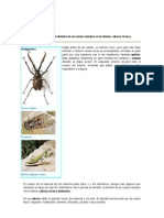 PARTES DE UN INSECTO.doc