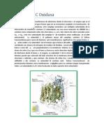 Informe 7 Terminado (1)