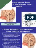 TRONCO ENCEFALICO.2