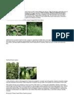 Fiber Plants Wwf