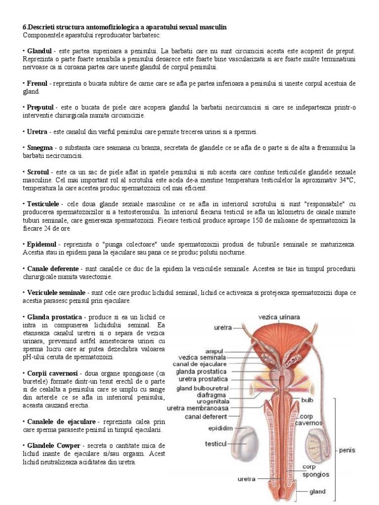 penisul masculin documentat