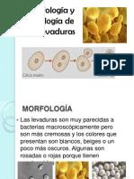 FISIOLOGIAlevaduras.pptx