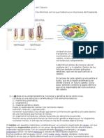 Anatomía y Fisiología del Cabello