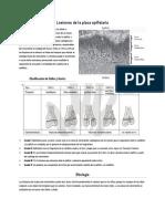 Lesiones de La Placa Epifisiaria