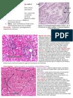 Morfopatologia Micro
