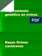 Mejoramiento genético en ovinos razas (1)