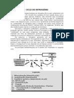 Biologia - Ciclo Do Nitrogenio [Gabriel Augusto Da Silva]