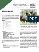 FS 16 Organic Pigs