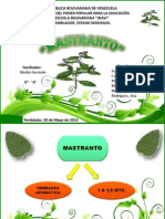 PRESENTACION MASTRANTO