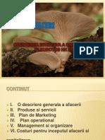 Plan de Afaceri Ciupercarie