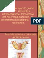 10.1 Anatomía del ap. genital femenino descriptiva,  por US, por TC,  por HSG, por sonoHSG   y por RM.