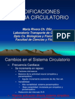 Modificaciones Sistema Circulatorio