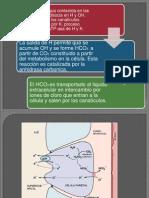 secrecion acido gastrico