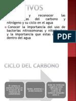 Ciclo Del Carbono 1 (1)