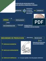 CAPITULO 14 Semiologia.pptx