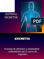 Sistem Excretor