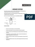 Urinary System.docx