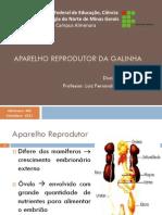 Aula 3 - Avicultura - Aparelho Reprodutor Da Galinha