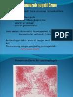 Bacteroides Sp. (1)