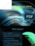 Light Production in Vibrio fischeri