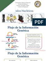 Ácidos nucleicos - Estructura y Función - Ultimate Version - Carlos Pedroza.pdf