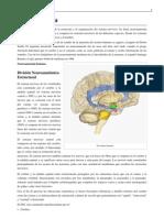 Neuroanatomía (1)