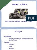 02 Zootecnia de Gatos