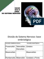 aula revisão neuroanatomia