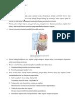 osseointegrasi