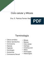 2 1ciclo Celular y Mitosis