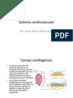 12 Cardiovascular