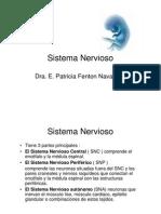 17 Sistema Nervioso