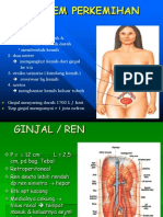 anatomi perkemihan