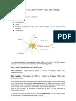 Neuro Clase2