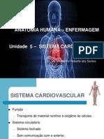 Anatomia Enf - Aula 8 (1)